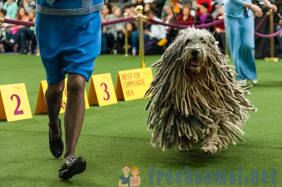 Izstāde Westminster Kennel Club 2017